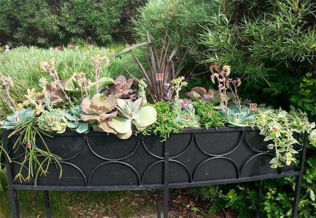 planter 3