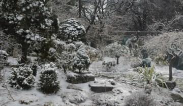 winter-gardn_marion-image_1