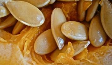Close-up of pumpkin seeds