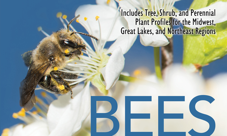 Wild Bees: Their Life Cycle, Foraging Behaviour and Role in Native Plant Pollination