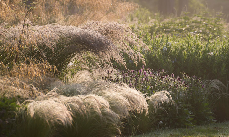 Wild-ish at Heart: Naturalistic Planting Design