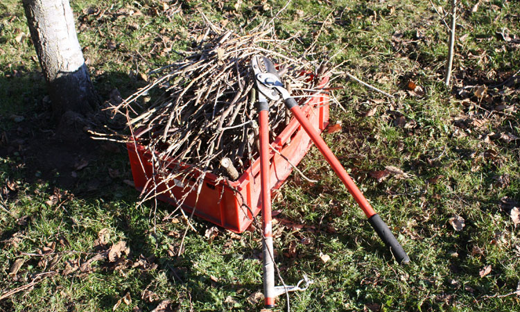 Basic Winter Tree Pruning