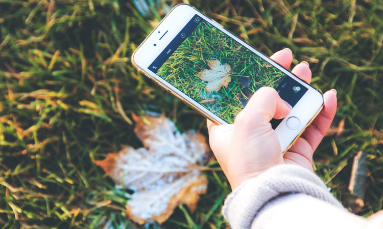 Smartphone Nature Photography for Beginners