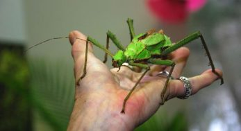 Volunteer holding a stick insect.