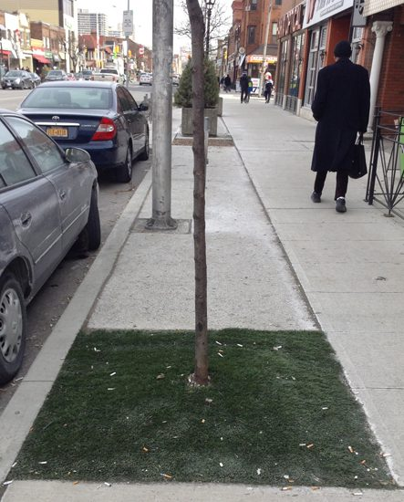 Grass growing in winter...as the Bloor West Village area enjoys some artificial green tree covers.