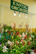 One of the vendors, Exotic Orchids, was there to celebrate the joined love for orchids with the TAOA.