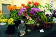 Winning orchids were on display throughout the show.