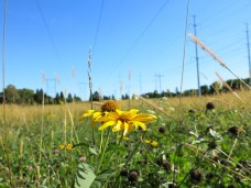 The new Butterfly meadow stretches from McCowan road to Scarborough Golf Club road along the hydro corridor