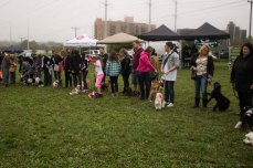 The line up of contestants for Scarborough's cutest small dog.