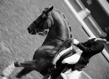 Dressage was a main attraction at the Royal Winter Fair.