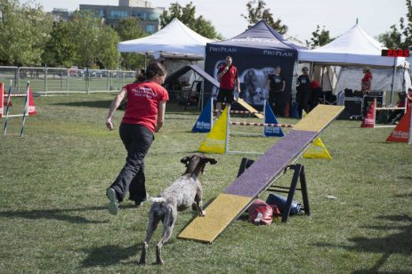 Thousands of people come to the Woodbine park with their dogs for the annual Woofstock festival.