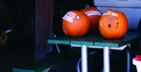 Pumpkins on display at Riverdale Farm recently.