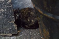 The tortoise shell cat that Nielsen first spotted.