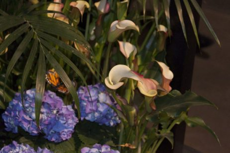 Flower displays show the different ways to arrange your flowers so you always get the best look.