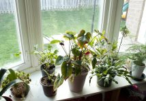 Having plants around can improve an individual's mood and health.