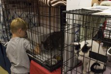 A young boy plays with a cat he wants to adopt on Sept. 16.