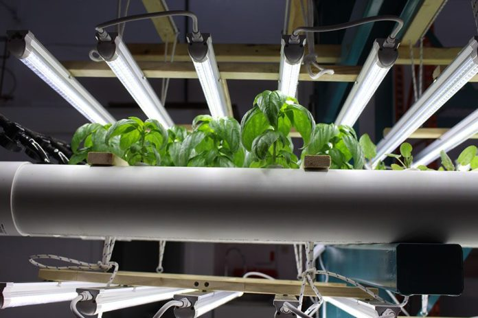 plants under a heating and lights system