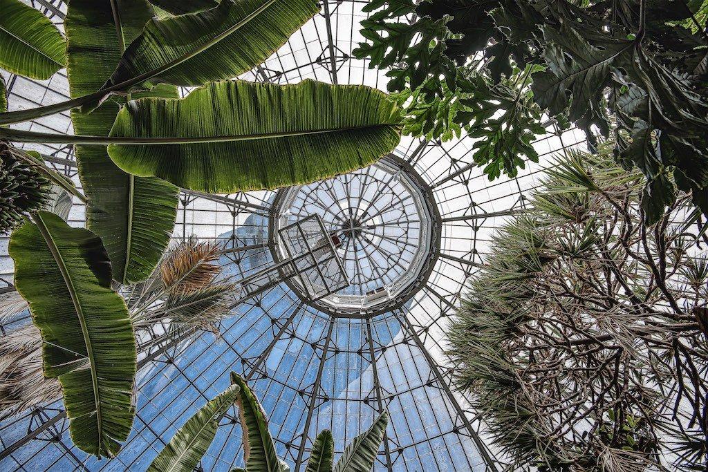Allen_Gardens.jpg