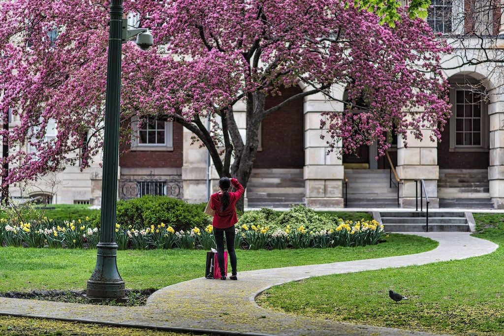 Spring At Osgoode Hall
