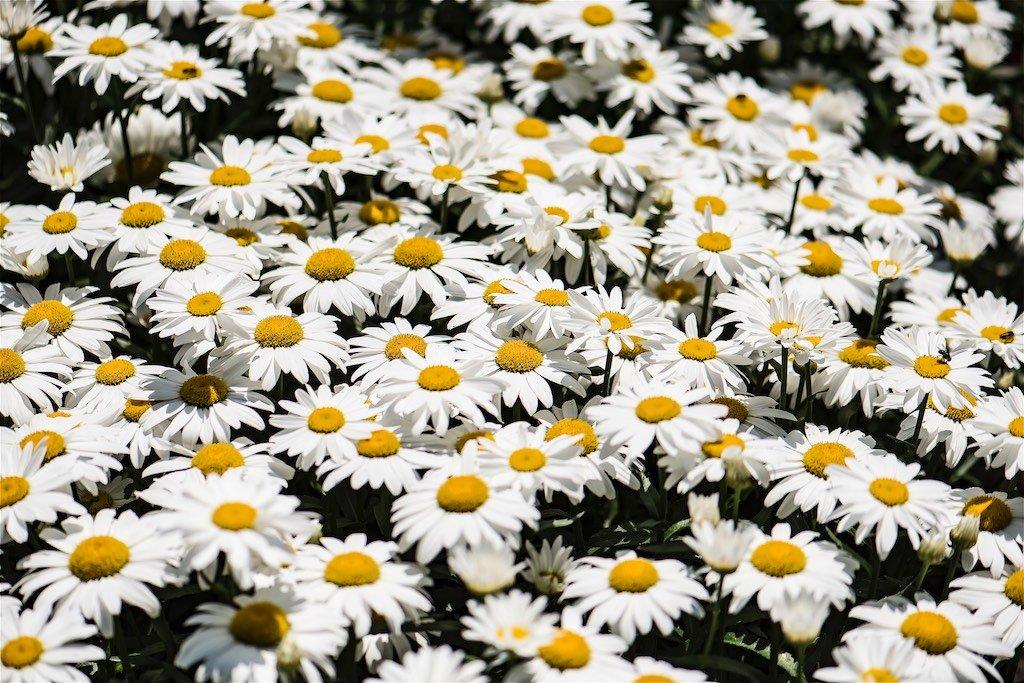 Edwards Gardens Flowers