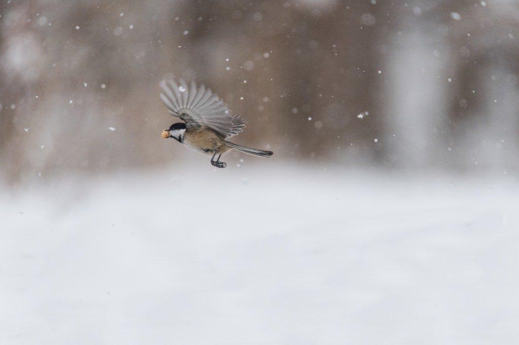 Toronto Paks in winter