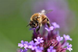 Bee_Garden.jpg