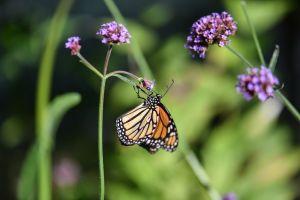 Butterfly-6.jpg