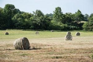 Hay_PE_County-c79.jpg