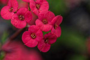 Allan_gardens-4.jpg