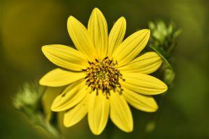 Flower-c0.jpg