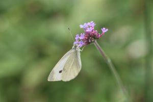 Flower_moth.jpg