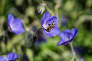 Flowers_Edwards_Gardens-21.jpg