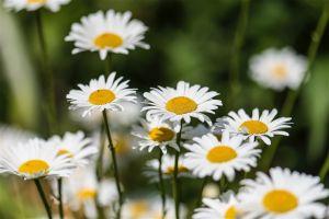 Flowers_Edwards_Gardens-4.jpg