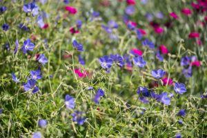Flowers_Gardens-4.jpg