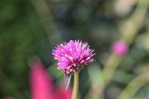 Flowers_Macro-18.jpg