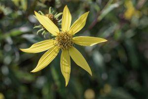 Flowers_Macro-29.jpg