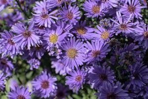 Flowers_Macro-42.jpg