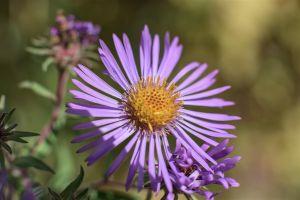 Flowers_Macro-54.jpg