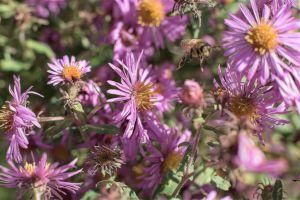 Flowers_Macro-56.jpg