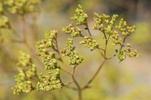 Flowers_Macro.jpg