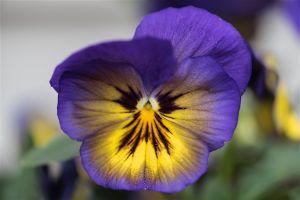 Gardens-5.jpg