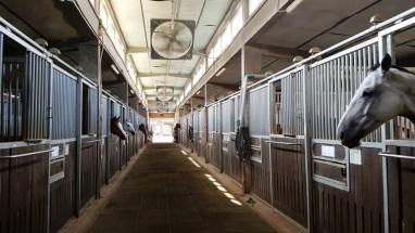 LetsRun Park Seoul Horse Racecourse
