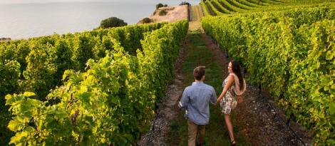 New Zealand Vineyard Marlborough Toronto Seoulcialite New Zealand Wine Festival