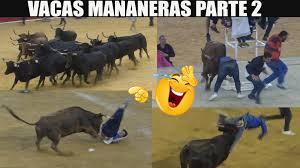 Vacas mañaneras parte 2