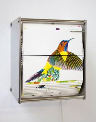 65_ornithologyp600