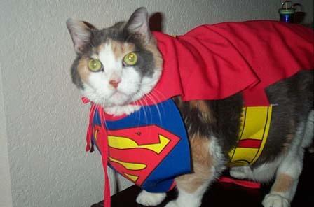SuperGato