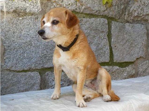 Perrita encontrada en Torrelodones el 15 de mayo 2011