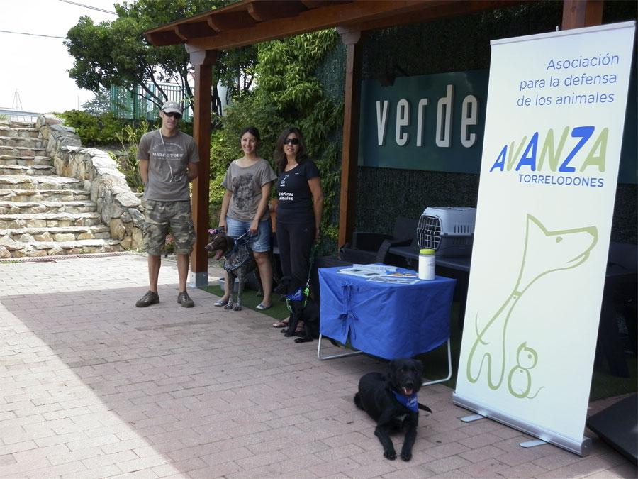 Avanza torrelodones promueve la adopci n de animales for Verdecora torrelodones