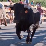 Encierros Fiestas de Hoyo de Manzanares 2