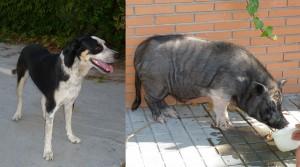 Animales encontrados en Torrelodones (12 y 13 de septiembre de 2011)